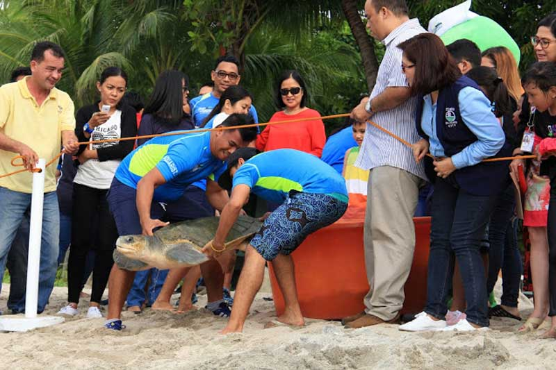 George, an Olive Ridley Sea Turtle released at Subic Bay