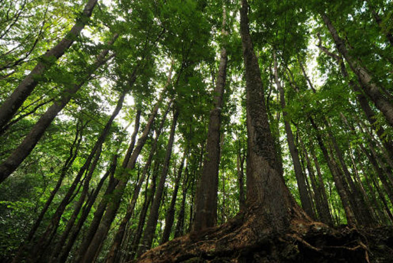 Forest regeneration training center planned in Zambales